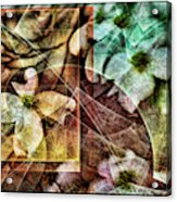 Dogwood Abstract Acrylic Print