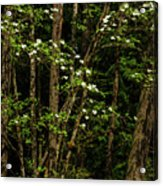 Dogwood Tree 2 Acrylic Print