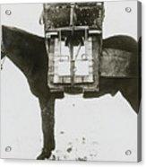 Donkey Carrying Portable Telegraph Acrylic Print