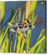 Dragonfly Perched By Pond Acrylic Print