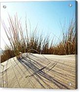 Dune Grass On A Sand Dune At The Beach Acrylic Print