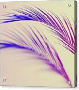 Duotone Background Of Tropical Palm Leaves Acrylic Print