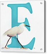 E Is For Egret Acrylic Print