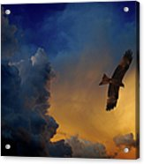 Eagle Over The Top Acrylic Print