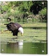 Eagle's Drink Acrylic Print
