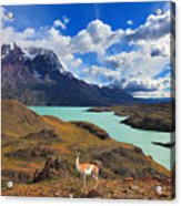 Early Autumn In Patagonia. National Acrylic Print