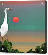 Egret At Evening Acrylic Print