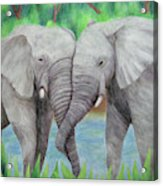Elephant Couple Acrylic Print