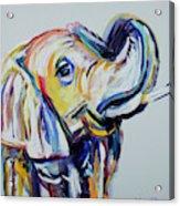 Elephant Tusk Acrylic Print