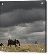 Elephant Under Cloudy Sky Acrylic Print