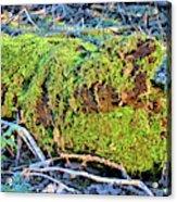Emerald Tree Acrylic Print