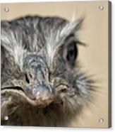 Emu Print 9052 Acrylic Print