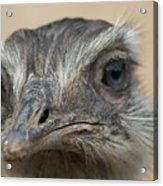 Emu Print 9053 Acrylic Print