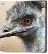 Emu Print 9092 Acrylic Print
