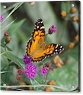 Equinox Butterfly  Acrylic Print