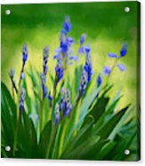 Essense Of Spring Acrylic Print