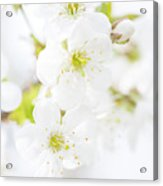 Ethereal Blossoms Acrylic Print