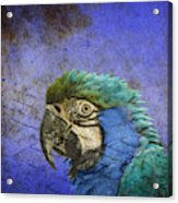 Blue Exotic Parrot- Pirates Of The Caribbean Acrylic Print