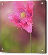 Exquisite Appeal Acrylic Print