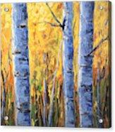 Fall Aspen Iv Acrylic Print