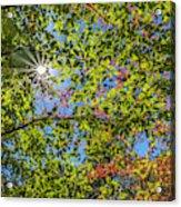 Fall Beginnings Acrylic Print