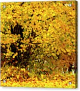 Fall To Grace Acrylic Print
