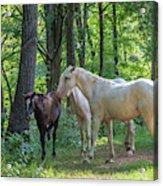 Family Of Horses Acrylic Print