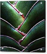 Fan Leave Succulent Plant Acrylic Print