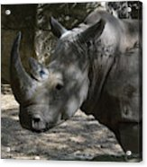 Fantastic Profile Of A Rhino With A Long Horn Acrylic Print
