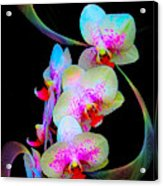 Fantasy Orchids In Full Color Acrylic Print
