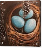 Feathers And Eggs Acrylic Print