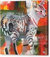 Feral Acrylic Print