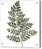 Fern Twig Illustration Grey Plant Watercolor Painting Acrylic Print