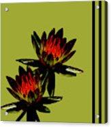 Fire Lilies Acrylic Print