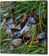 First Frost In Sweden Acrylic Print