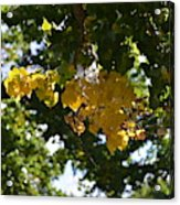 First Golden Leaves Acrylic Print