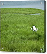 Salt Marsh Flight Acrylic Print