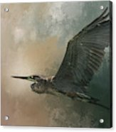 Flight Of The Great Blue Acrylic Print