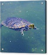 Floating Turtle Acrylic Print