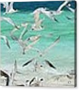 Flock Of Seagulls By Azure Beach Acrylic Print