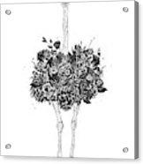 Floral Ostrich Acrylic Print