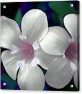 Floral Photo A030119 Acrylic Print