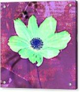 Flower 2918 Acrylic Print