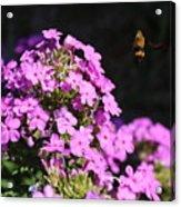 Flower And Bee Acrylic Print