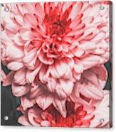 Flower Buds Acrylic Print