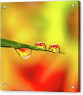 Flower In Water Droplet Acrylic Print