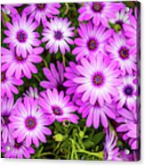 Flower Patterns Collection Set 04 Acrylic Print