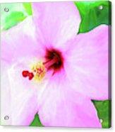 Flowers Of Florida I Acrylic Print