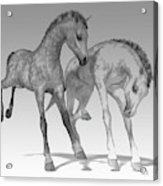 Foals Black And White Bleached Acrylic Print