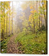 Foggy Winsor Trail Aspens In Autumn 2 - Santa Fe National Forest New Mexico Acrylic Print